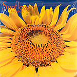 Published photography by Larry Angier..Sunflowers 2008 Calendar, Browntrout Publishers
