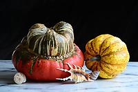 Turban Squash with shells, still life