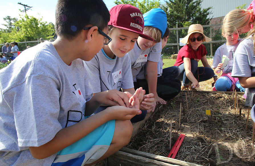 NWA Democrat-Gazette/DAVID GOTTSCHALK   Will Hodge (left) and Cody Brooks, both fourth grade students at Butterfield Trail Elementary School, plant radish seeds Tuesday, May 2, 2017, with classmates at the Apple Seeds Training Farm in Fayetteville. Two fourth grade classes from the school participated in a Farm Lab that included planting, harvesting and preparing a tzatziki and humus deep to eat.