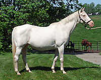 Precious Beauty at Patchen Wilkes Farm, near Lexington, Kentucky, in 1998