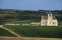 Europe/France/89/Yonne/ Chablis: l'église de Préhy au milieu du vignoble AOC Chablis