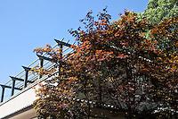 Gravesend
