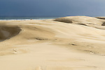 Stockton Beach Sand dunes Worimi Conservation Lands. Anna Bay, Port Stephens, NSW, Australia