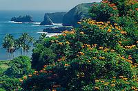 Tulip tree<br /> Moku Mana Island<br /> Hana Highway<br /> Island of Maui, Hawaii