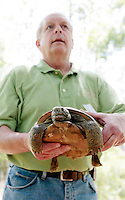 GAINESVILLE, FL. 4/28/09-GOPHERHOME CH1-Rob Hicks, wildlife biologist with Plum Creek, holds a mature male Gopher Tortoise prior to releasing it into it's permanent new home Tuesday on the Lochloosa Conservation Easement south of Gainesville. The Plum Creek property is the first site permitted under new regulations to protect the threatened species. The first four residents were welcomed Tuesday to a 570-acre site that will eventually be home to 1,781 Gopher Tortoises.  ..COLIN HACKLEY PHOTO