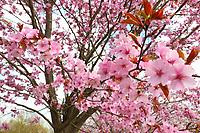 MAR 28 Colourful Springtime Blossom