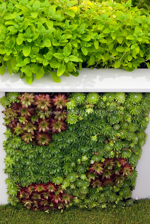 Succulents being grown creatively in a wall
