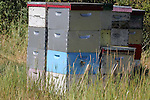 BEES AND BEE  HIVES Beehives in a field