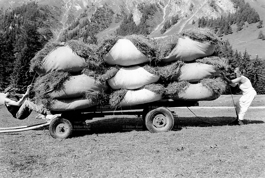 Switzerland. Canton Graubunden. Ftan. Lower Engadine valley. Ursula and Reto Pedotti are making hay and loads the hay bags on a cart. Manual labor. Labour force. Swiss alpine farmers. Alps mountains peasants.  © 1993 Didier Ruef / pixsil