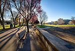 Idaho, North, Kootenai County, Coeur d'Alene. Pink flowering trees line the seawall at city park on a spring morning.