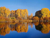 ORCAC_095 - USA, Oregon, Deschutes National Forest, Autumn colored quaking aspen trees reflect in the Deschutes River.
