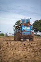 Spreading cattle manure at 50t/ha - August, South Lincolnshire