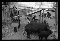 East Village, Diqing Tibetan Autonomous Prefecture, Yunnan Province, China - A Tibetan villager and farm animals, February 2017.
