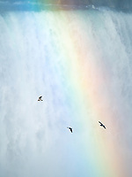 Niagara Falls is the land of perpetual rainbows on sunny days.  Seagulls seem to play and soar in the currents of the falls and through the almost <br /> daily rainbows.