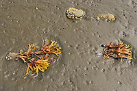 Mathers Creek at low tide. Louise Island. , Haida Gwaii (formerly the Queen Charlotte Islands), British Columbia, Canada