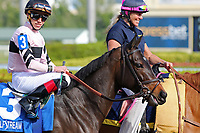 HALLANDALE BEACH, FL - DECEMBER 16:  Lewis Bay with Irad Ortiz Jr on board in the post parade of the G3 Rampart  Stakes at Gulfstream Park on December 16, 2017 in Hallandale Beach, Florida. (Photo by Liz Lamont/Eclipse Sportswire/Getty Images)