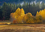 Wenatchee National Forest, Washington:<br /> Open meadow with rising mist and fog in the autumn forest of the Cascate mountains