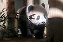 Ueno Zoo's Panda cub makes public debut