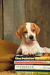 POINTER PUPPY<br />