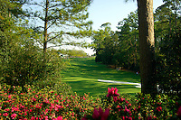 Masters Golf Tournament 2005, Augusta National Georgia, USA. Hole no. 10, Camellia. <br /> <br /> Champion 2005 - Tiger Woods <br /> <br /> Note: There is no property release or model release available for this image.