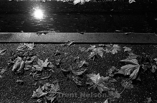 Leaves and gutter in rain at night.<br />