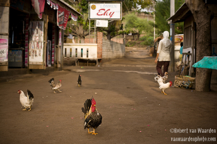 A rooster and chickens walk down a dirt road on Gili Trawangan, Lombok, Indonesia.