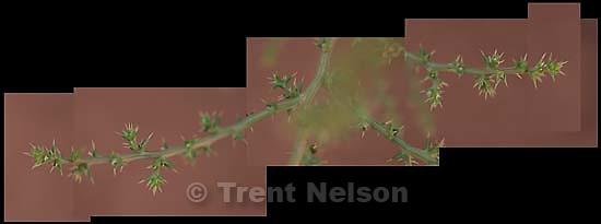 plant seq, moab<br />