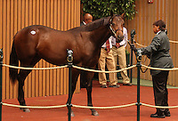 Hip #25 Malibu Moon - So Probably sold for $300,000, consigned by Lane's End at the Keeneland September Yearling Sale.  September 10, 2012.
