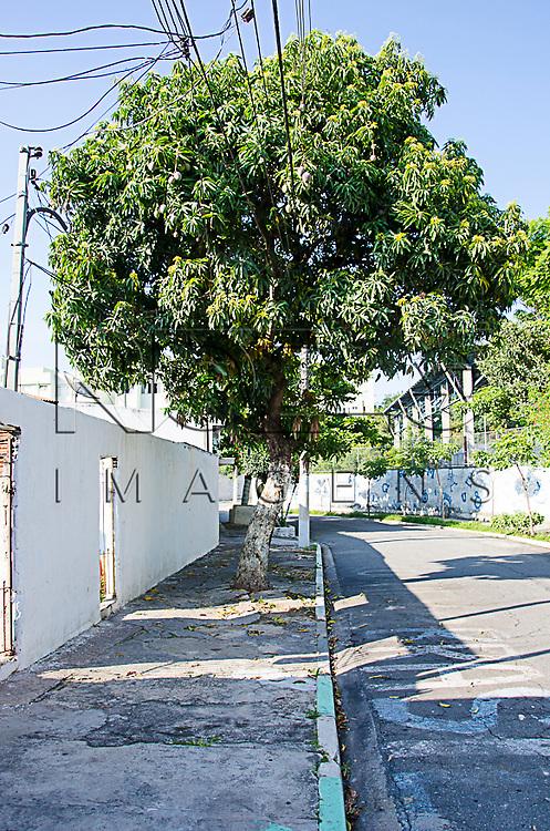 Rua com fios entre a árvore, São Paulo - SP, 01/2015.