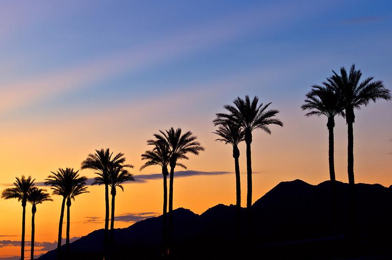 Palm trees at sunrise. Palm Desert, California