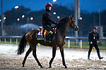 November 1, 2018: Gustav Klimt (IRE), trained by Aidan P. O'Brien, exercises in preparation for the Breeders' Cup Mile at Churchill Downs on November 1, 2018 in Louisville, Kentucky. Alex Evers/Eclipse Sportswire/CSM