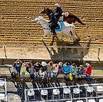 May 15, 2019 :  War of Will passes fans in the stands as horses prepare for Preakness Week at Pimlico Race Course in Baltimore, Maryland. Scott Serio/Eclipse Sportswire/CSM