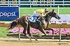 Lookout Sister winning at Delaware Park on 7/18/15