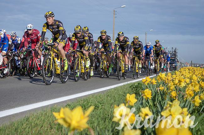 peloton<br /> <br /> 3 Days of De Panne 2017<br /> Morning stage 3: De Panne-De Panne (111,5km)