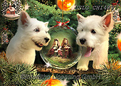 CHIARA,CHRISTMAS ANIMALS, WEIHNACHTEN TIERE, NAVIDAD ANIMALES, paintings+++++,USLGCHI489,#XA# ,funny ,funny