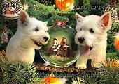 Christmas - funny photos