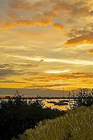 EUS- Selby Gardens & Sarasota Bay Sunset, Sarasota FL 12 13
