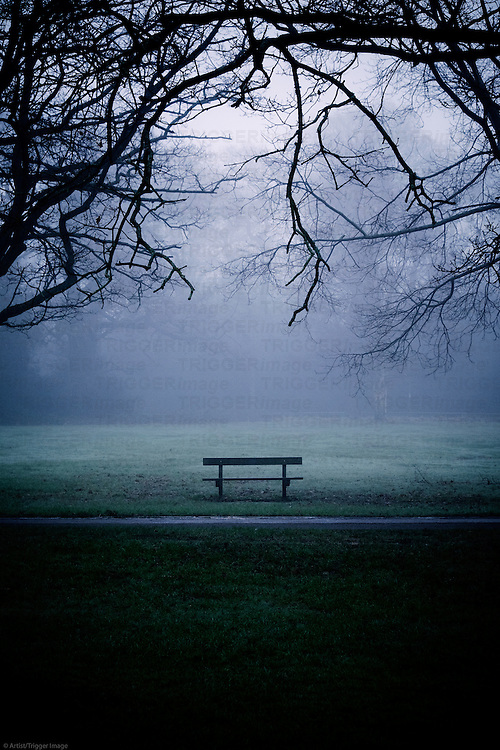 Trees in a misty park with empty bench