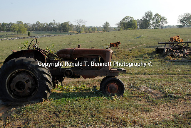 Farm tractor cattle Maryland, cattle herd, Old Line State, Free State, Fine Art Photography by Ron Bennett, Fine Art, Fine Art photography, Art Photography, Copyright RonBennettPhotography.com ©
