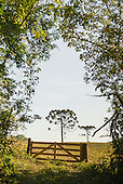 Wooden gate and Araucaria trees in farmland.
