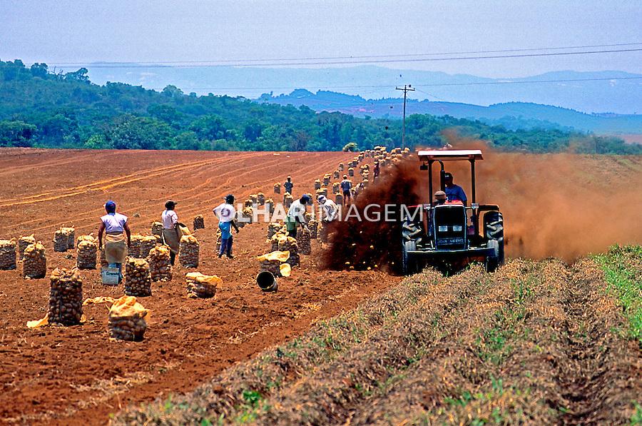 Colheita de batata em Três Corações. Minas Gerais. 1996. Foto de Juca Martins.