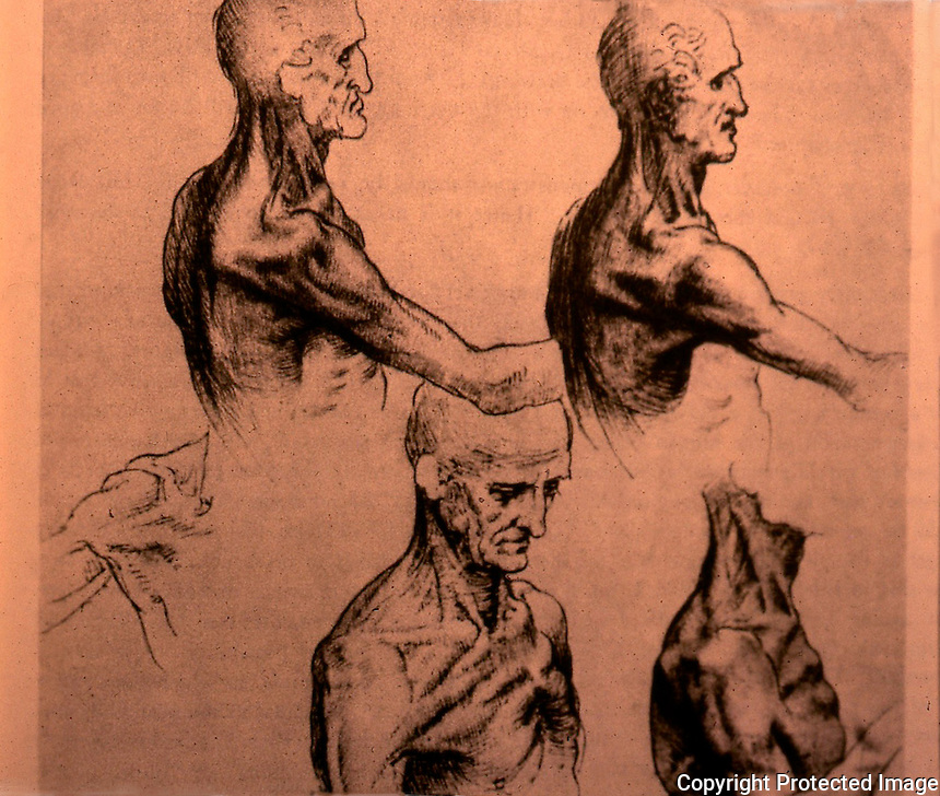 Visual Arts:  Leonardo Drawing--Muscles of the Chest--from LIFE.  Photo '84.