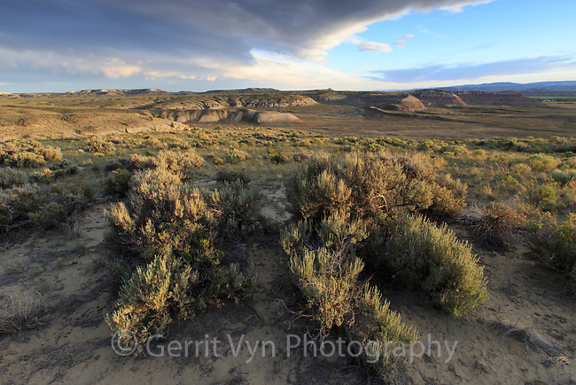 Sagebrush steppe landscape on BLM land. Sublette County, Wyoming. June.