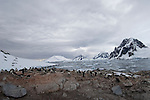 An Adelie penguin colony on Peterman Island, Antarctic Peninsula.