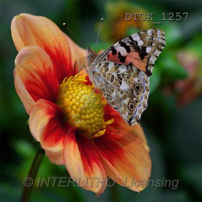 Gisela, FLOWERS, photos(DTGK1257,#F#) Blumen, flores, retrato