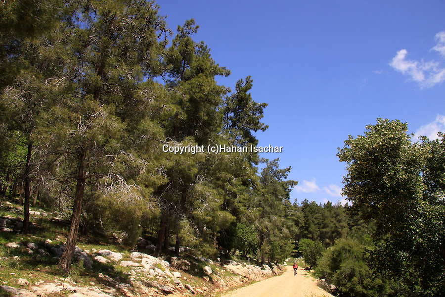 Israel, Lower Galilee, Zippori forests Scenic road