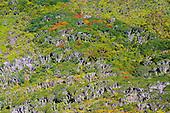 Forêt du Mont Mou, Païta