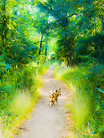 A dog walks down a path through the woods.