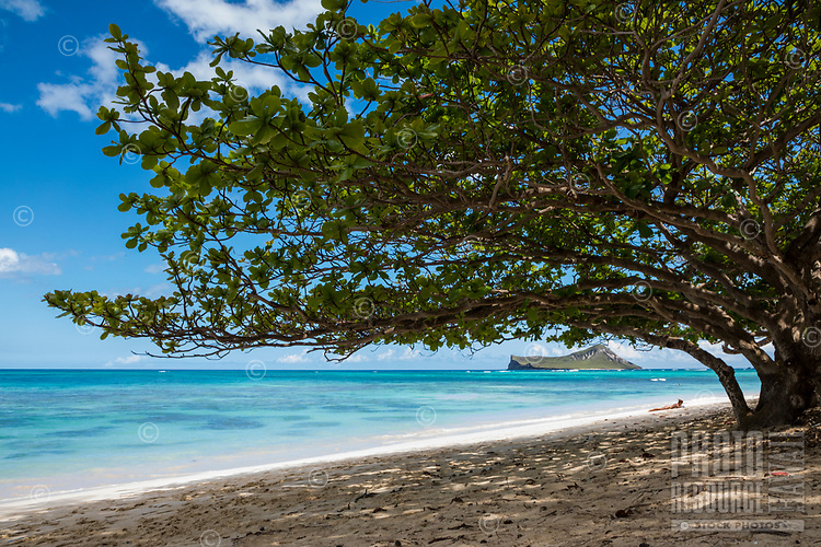 A sunbather enjoys the sunny day at Waimanalo Beach in Windward O'ahu; a shady tree's lowest branch seems to touch the top of Rabbit (or Manana) Island in the distance.