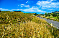 Stage One of the 2018 NZ Cycle Classic UCI Oceania Tour in Wairarapa, New Zealand on Wednesday, 17 January 2018. Photo: Dave Lintott / lintottphoto.co.nz